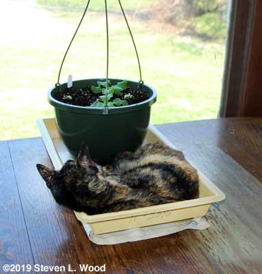 Callie Jo in plant tray