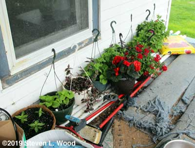 Hanging basket plants on porch
