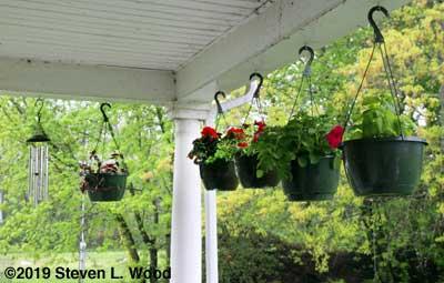 More porch plants