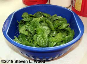 Baby Abundant Bloomsdale spinach
