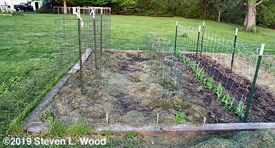 Earlirouge tomatoes, Earliest Red Sweet peppers, and Eclipse and Encore peas
