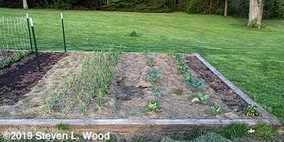 Lima row (not up yet), garlic, broccoli, and cauliflower
