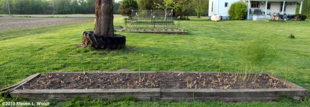 Raised asparagus bed with garden raised beds in background