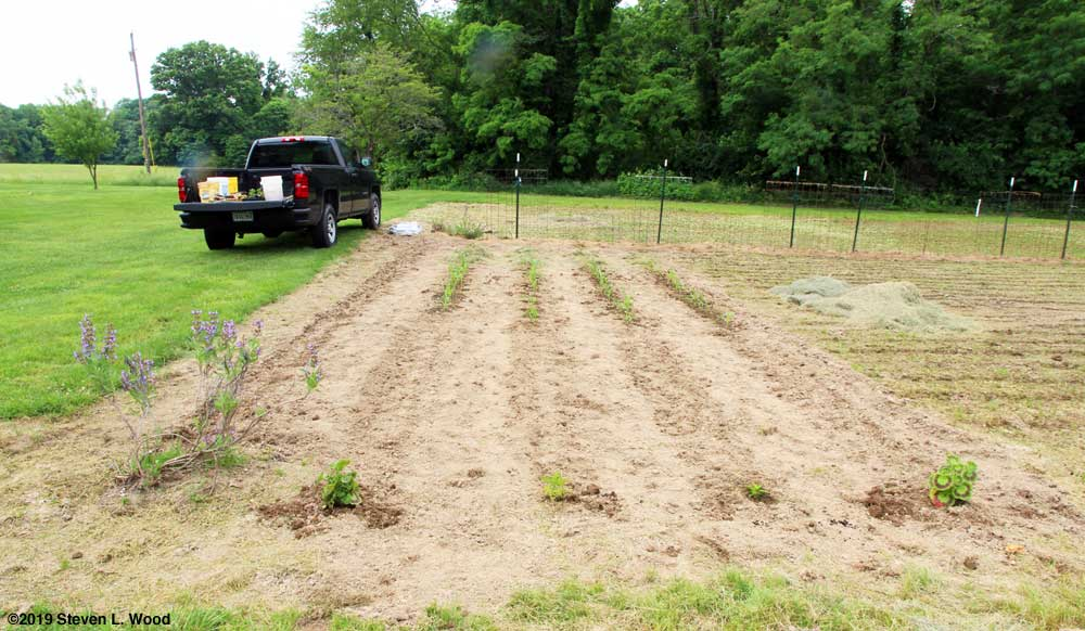 Finished planting of broccoli, sweet corn, and kidney beans