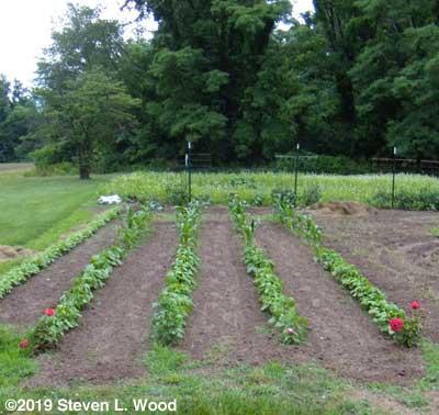 A smaller than usual East Garden