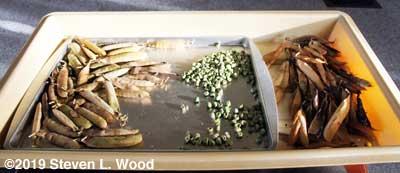 Plant trays serve multiple uses