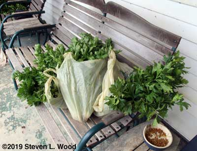 Celery bagged to go to the food bank