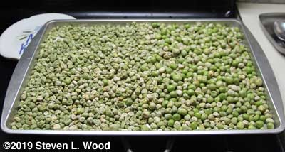 2019 Eclipse Seed Peas drying