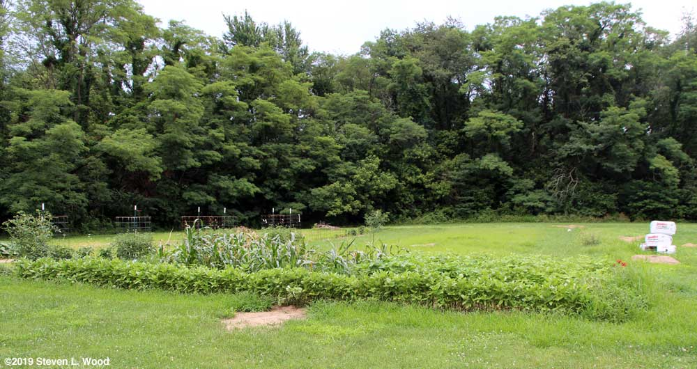 Mostly unplanted East Garden plot