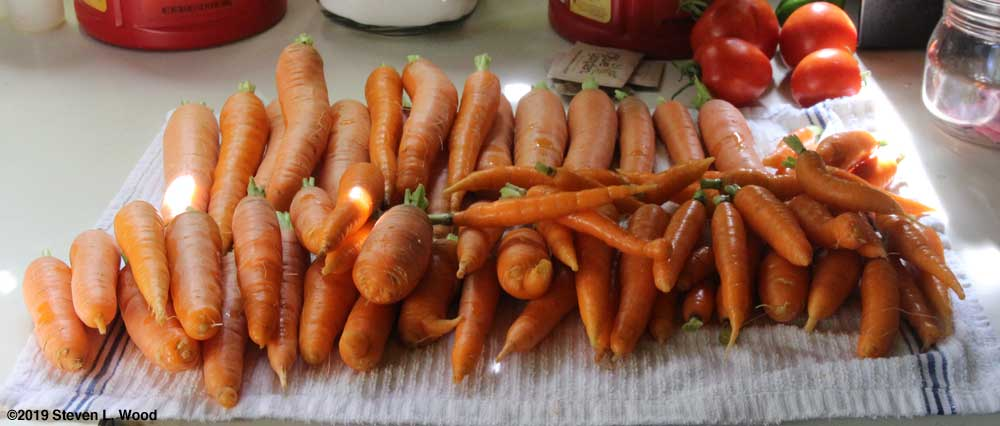 Carrots trimmed and cleaned