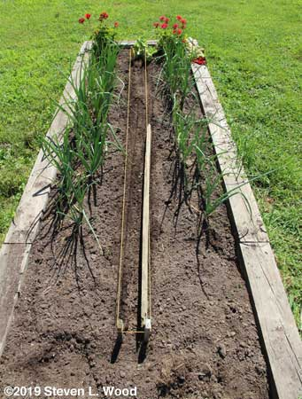 Rows strung, making furrows with one inch lumber