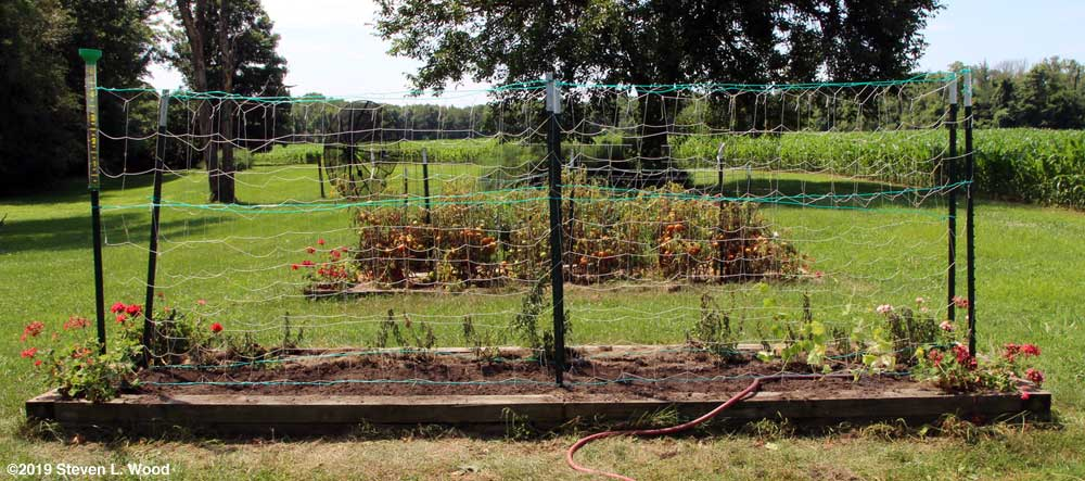 Finished seeding of peas and transplanting of cucumbers