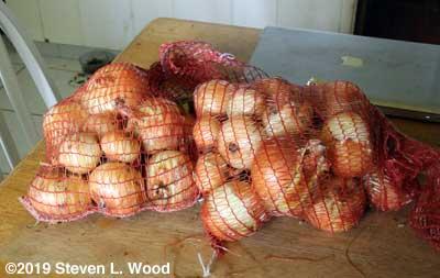 Nine pounds of bagged Walla Walla onions