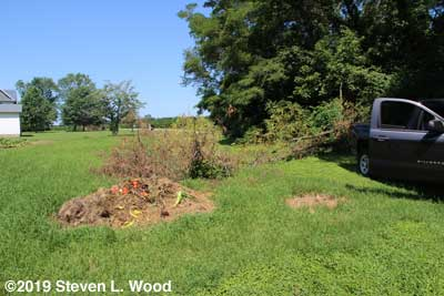 Tree down in East Garden, compost pile