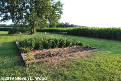 Tomato plants, cages, mulch, and T-posts removed