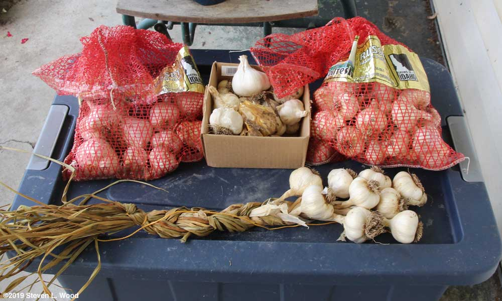 Bagged, braided, and culled garlic