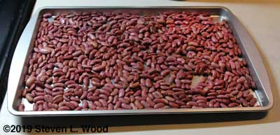 Kidney beans on drying tray
