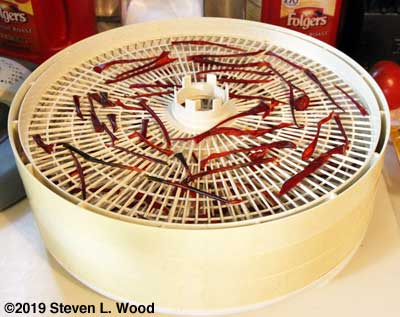 Dried paprika peppers on dehydrator tray