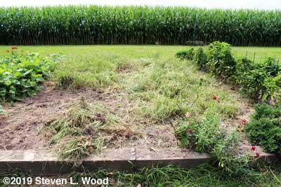 Weedy main garden bed