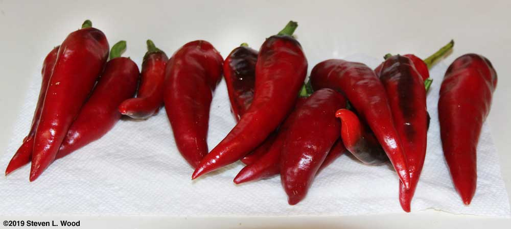 Hungarian Spice Paprika Peppers