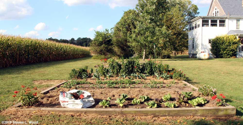 Main raised bed from south to north