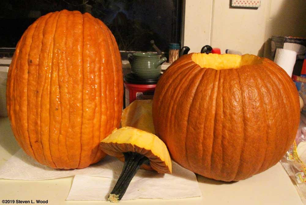 Tallest and heaviest pumpkins of the season