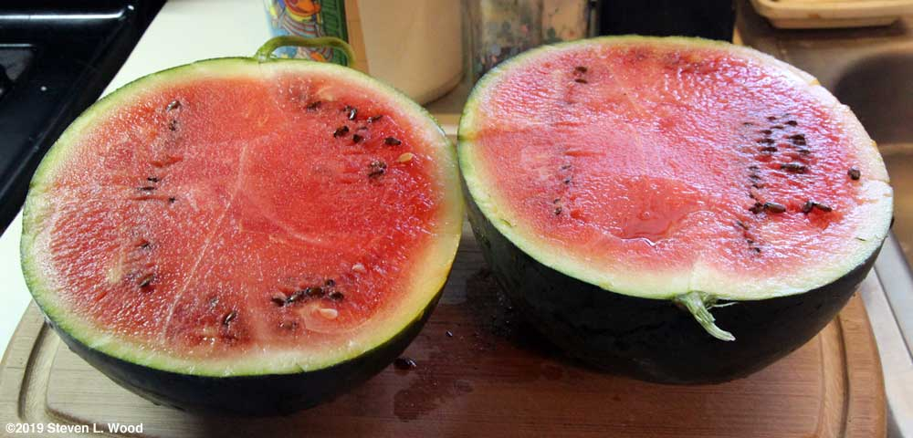 An October Blacktail Mountain watermelon