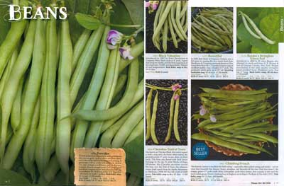 pp16-17 Seed Savers Beans