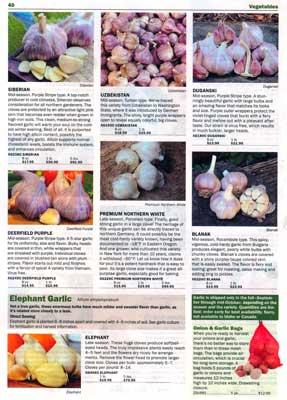 Territorial page 40 - beautiful garlic