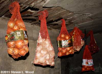 Bagged onions in basement storage