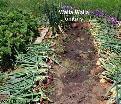 Walla Wallas still standing