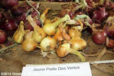 Juane Paille Des Vertus onions