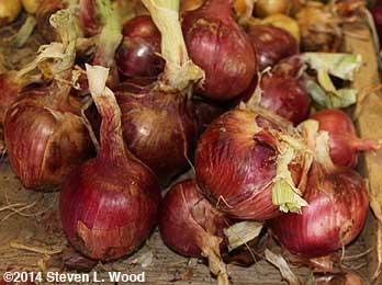 Rossa di Milano onions